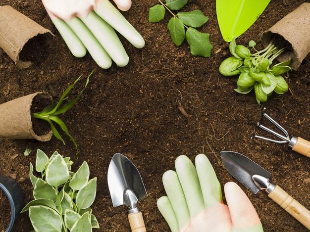 Les avantages des jardins familiaux